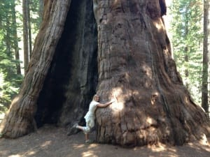 Wendie hugging a Sequoia tree